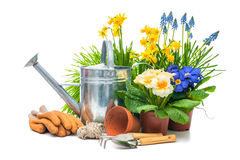 Gardening. Tools and flowers isolated on white with copy space stock images