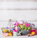 Gardening tools with flowers plant on terrace or yard at white wooden wall. Watering can, shovel, flowers pot and basket Stock Image