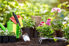 Gardening tools and flowers in pot for planting at backyard. Royalty Free Stock Photography