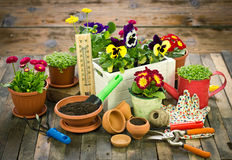 Gardening tools and flowers. On the table Royalty Free Stock Photo