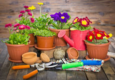 Gardening tools and flowers. On the table Royalty Free Stock Photos