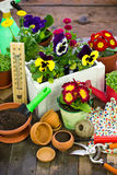 Gardening tools and flowers. On the table Stock Photos