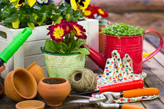 Gardening tools and flowers. On the table Stock Images