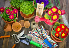 Gardening tools and flowers. On the table Stock Photography