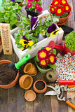 Gardening tools and flowers. On the table Stock Image