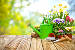 Gardening tools and flowers on the terrace. In the garden Royalty Free Stock Photo