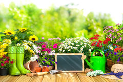 Gardening tools and flowers on the terrace i Stock Images