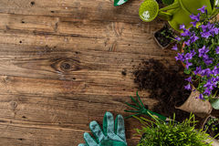 Gardening tools and flowers on wooden background. Close-up Stock Photography