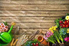Gardening. Tools and flowers on wooden table royalty free stock image
