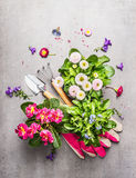 Gardening tools with fresh pretty garden flowers in pots on stone background. Top view Royalty Free Stock Photography