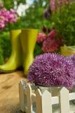 Gardening tools  in the garden Stock Images