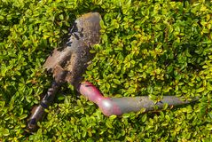 Gardening tools. In the green bush Stock Photography