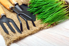 Gardening tools with green grass Royalty Free Stock Photo