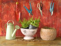 Gardening tools with herbs Stock Photography