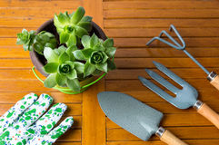 Gardening tools and houseleek plant Royalty Free Stock Images