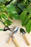 Gardening tools and houseplants. Still life stock photos