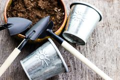 Gardening tools and hyacinth flower. Spring and summer cultivating plants. Earth environment and nature growing close up. Gardening tools and hyacinth flower stock photos