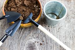 Gardening tools and hyacinth flower. Spring and summer cultivating plants. Earth environment and nature growing close up. Gardening tools and hyacinth flower royalty free stock image