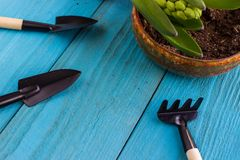 Gardening tools and hyacinth flower. Spring and summer cultivating plants. Earth environment and nature growing close up. Gardening tools and hyacinth flower stock image