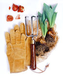 Gardening tools isolated Royalty Free Stock Photo