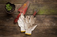 Gardening tools on old wooden background Royalty Free Stock Photo