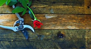 Gardening tools on old wooden table Stock Images