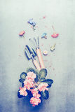 Gardening tools and pink pale flowers in pot Stock Image