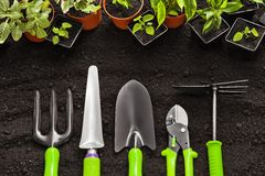 Gardening tools and plants. On land Stock Images