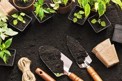 Gardening tools and plants. On land Royalty Free Stock Photos