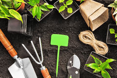 Gardening tools and plants. On land Stock Photo