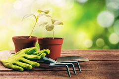 gardening tools and plants on old wooden table Royalty Free Stock Images