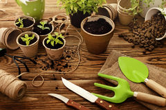 Gardening tools and plants. Gardening tools, watering can, seeds, plants and soil Stock Photo