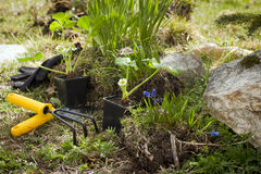 Gardening tools and plants Stock Image