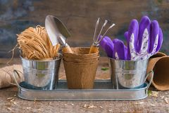 Gardening tools, pots and utensils on rustic wooden background royalty free stock photo