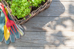 Gardening tools and seedling on garden table. Top view with copy space Royalty Free Stock Photography