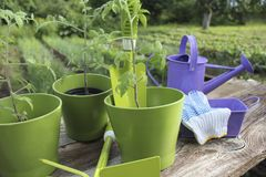 Gardening tools and seedling Stock Photography