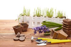 Gardening tools and seedlings. Royalty Free Stock Photos