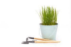 Gardening tools and seedlings. Royalty Free Stock Image