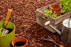Gardening tools and seedlings over mulch stock image