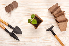 Gardening tools and seedlings. Royalty Free Stock Photo