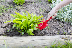 Gardening. Tools in a soil Stock Images
