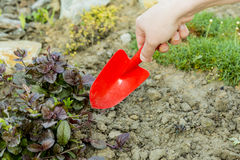 Gardening. Tools in a soil Stock Image