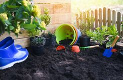 Gardening tools on soil background ready to planting flowers and small plant in the spring garden works concept gardening royalty free stock photo