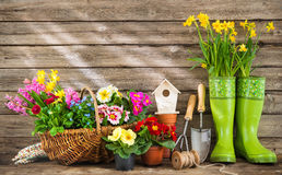 Gardening tools and spring flowers. On wooden background Royalty Free Stock Images