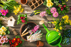 Gardening tools and spring flowers. On wooden table Stock Image