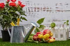 Gardening Tools, Sprouts And Flowers Stock Photo