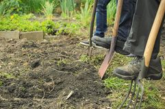 Gardening tools in use. Side landscape view of gardening shovels and forks in use Royalty Free Stock Images