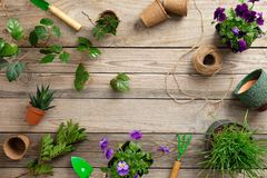 Gardening tools with various flowers plant in pot on vintage wooden background. Flat lay, top view.  stock images