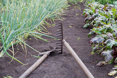 Gardening tools in the vegetable garden Stock Photo