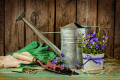 Gardening tools on vintage wood background - spring Royalty Free Stock Photos